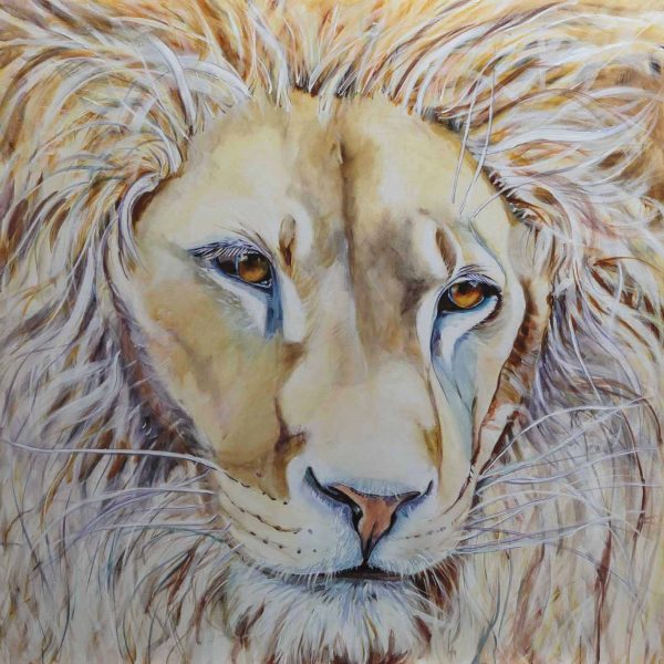 Love, lion, lon of judah, white lion, compassion