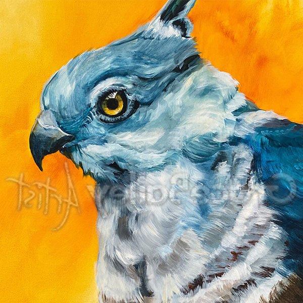 crested hawk, bird, crested hawk bird painting