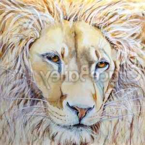 love, lion, lion painting, lion of Judah, king of the jungle