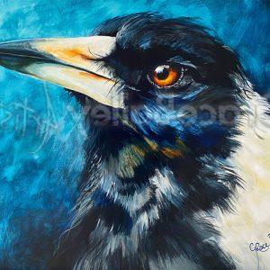 magpie, bird, magpie bird painting