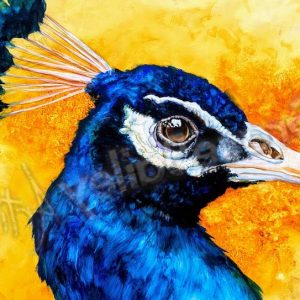 peacock, bird, peacock bird painting